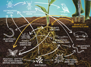 Restoring Life to Soil