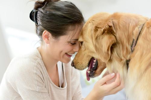 Krankheitsbild: Harninkontinenz bei Hunden