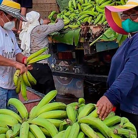 Venderán 180 mil dedos de plátano bellaco Hartón