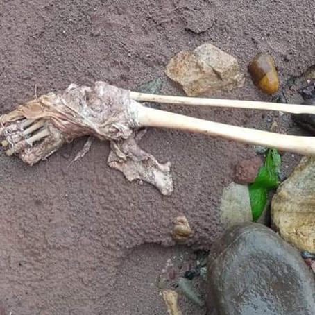 Encuentran restos humanos en costal