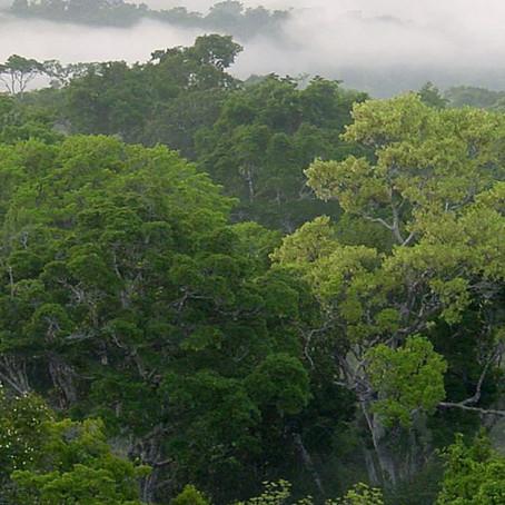 Protección de la Amazonía tiene respaldo internacional