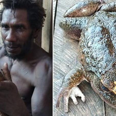 Hallan rana del tamaño de un bebé humano en las Islas Salomón