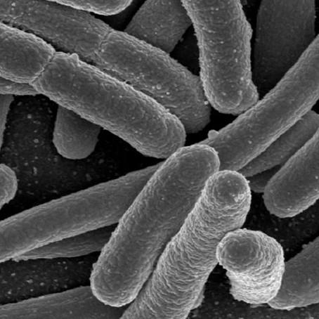 Debido al cambio climático, las bacterias evolucionan más rápido
