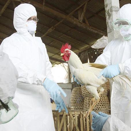 Rusia confirma primer caso de gripe aviar H5N8 en humanos