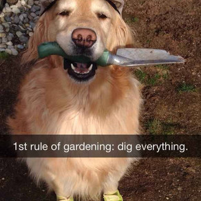 IS YOUR DOG A KEEN GARDENER?
