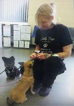 dog trainer with 2 small dogs