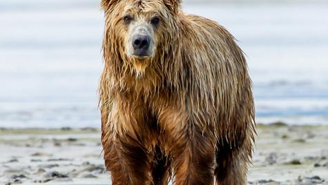 Alaska3782.jpg