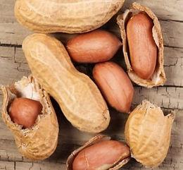 Peanut Seedlings