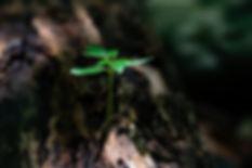 pexels.close-up-environment-flora-ground