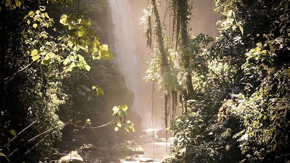 Waterfall Wonderland
