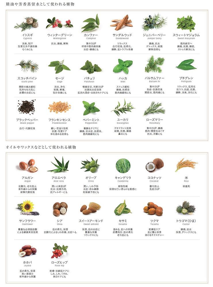 botanical book.jpg