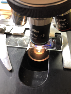 Our laboratory routinely analyses samples. This one is an airborne total count at 400x magnification