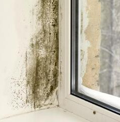 Many brand new apartments suffer from high humidity and condensation issues often from poor ventilation. This mould (Cladosporium) loves a little drink overnight...