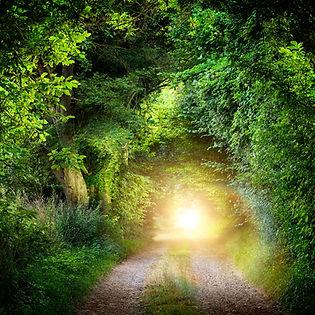 tunnel of trees.jpg