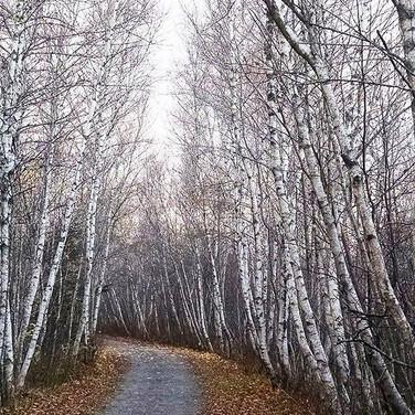#birch