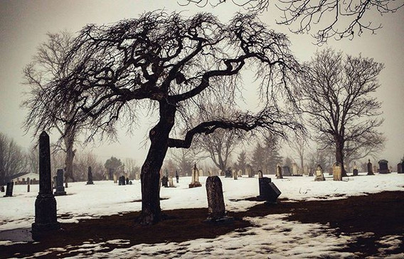 That tree_#lunenburgns #theacademygravey
