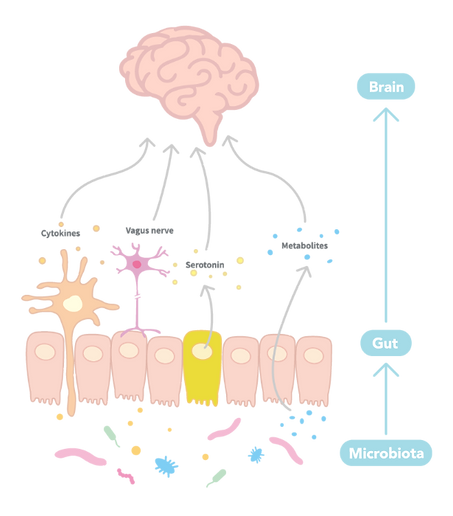 Psychobiotic PS128 Function