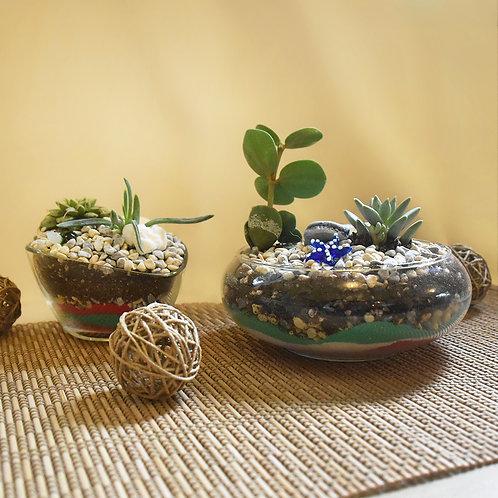 Acacia Class's Sand Terrarium