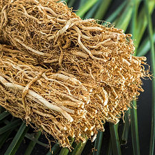 Vetiver-Fragrance-Oil.jpg
