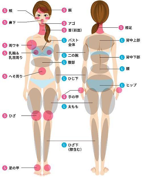 お見積り部位の一覧表:見積もり部位(脱毛箇所):顔、額、アゴ、頬、鼻下、首、襟足、背中上部、背中下部、腰、ヒップ、お尻、バスト、両ワキ、乳輪、乳首周り、へそ周り、二の腕、ひじ下、腹部、手の甲、太もも、ひざ下、足の甲、指