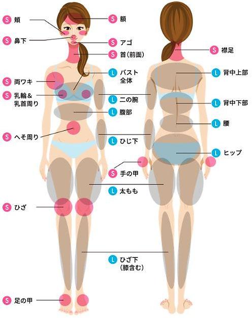 身体の脱毛箇所をSパーツ(脱毛面積が小さいパーツ)、L(脱毛面積が大きいパーツ)で表示