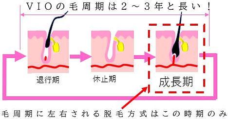 VIOの毛周期のサイクル図