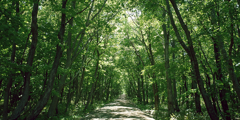 Shinrin-Yoku, Forest Bathing And Its Inspiration on Creativity in the Arts