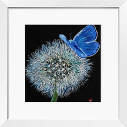white frame + butterfly on dandelion.jpg
