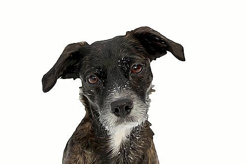Pet Portrait  Digital Cartoon Detailed (without splashes)- personalise!