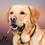 Thumbnail: Pet Portrait  Digital Oil painting style - personalise