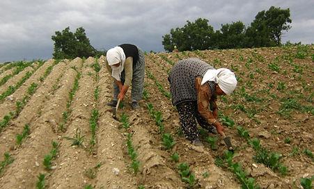 tütün çapası, tütün işçileri