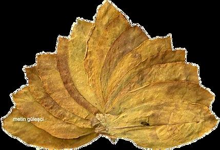 yaprak tütün, oriental leaf tobacco