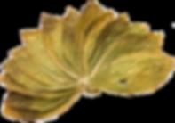 izmir tütünü, ege tütünü, oriental tobacco, leaf tobacco