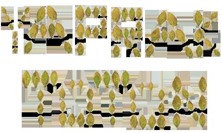yaprak tütün