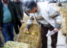 tütün köy tespiti