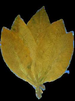Bitlis tütünü