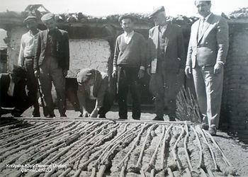 deneme tütün üretimi
