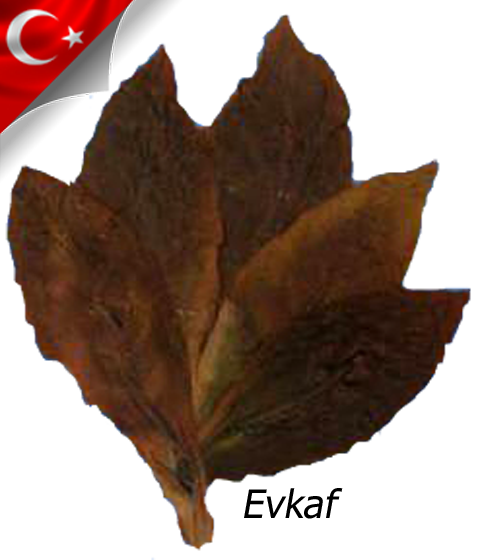 Evkaf/Samsun