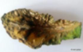 Tobacco TSWV,tütünde lekeli olgunluk virüsü