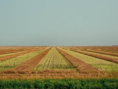 Les grandes prairies/The vast prairies