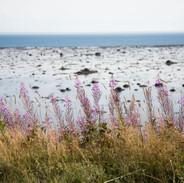 Fjord-7.jpg