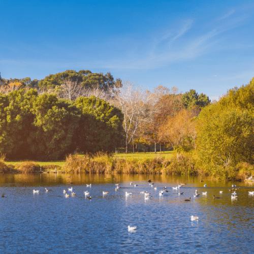 Vista sobre o lago do parque cheio de gaivotas