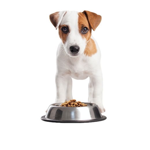 Puppy%20Having%20Lunch_edited.png