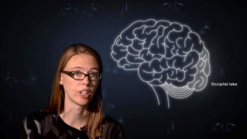 Madeline Lancaster's 'Mini Brains'