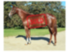 Horse For Sale Crawford Racing