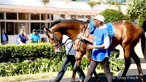 Undercover Agent Runs a game 4th in Gr1 Sprint. Nominated for Gr1 Rising Sun Gold Challenge.