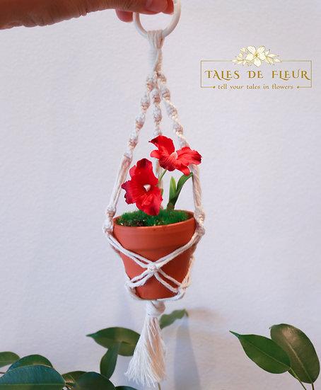 Mini macrame hanger -Amaryllis