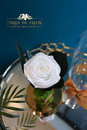 Preserved Rose_ White color