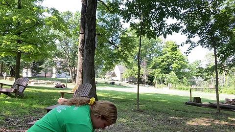 Plants at Hayes Arboretum