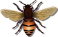honey-bee-vector-clipart.png